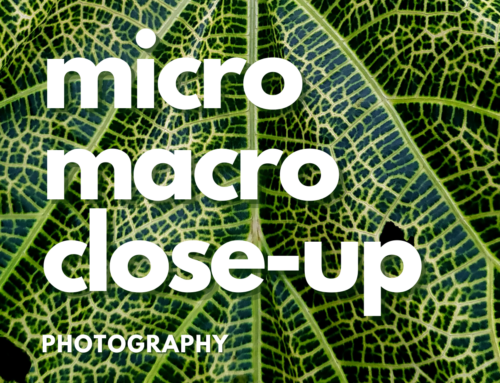 Close-Up / Micro / Macro Photography